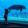 AAABusini-Alberto-052261-A-tu-per-tu-col-delfino-2020_2020WLC
