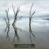 AAAColditz-Eric-000000-Tranquility-2020_2020WLC