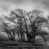 AAABRASSI-MONICA-MASSIMILIANA-054328-Tra-le-nuvole-2019_2020WLC