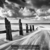 AAAWoolgar-Christine-000000-Seashore-Swell-2020_2020WLC