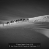 An-Xiping-000000-Camels-In-Teh-Desert-2017_2019WLC