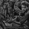 Chattopadhyay-Kalyan-000000-The-Goat-Seller-2017_2019WLC