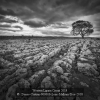 Donos-Cristian-000000-Lone-Malham-Tree-2018_2019WLC