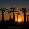 Brega-Giulio-013326-Allee-des-baobabs-2019_2019WLC