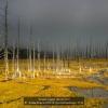 Fratini-Franco-043618-Spectral-landscape-2018_2019WLC