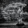 Larry-Cowles-000000-Blue-Cypress-Lake-View-2019_2019WLC