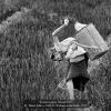Misuri-Marco-006430-Working-in-the-fields-2019_2019WLC