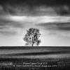 ZAIO-GIANLUCA-046682-Family-tree-2019_2019WLC