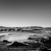 Maritza-Molina-Achecar-000000-Paseando-por-el-Desierto-2019_2019WLC