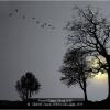 SIMON-Claude-000000-Moonlight-2019_2019WLC