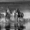Li-Yat-Sang-000000-HERDING-HORSES-2-2018_2019WLC