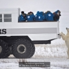 AAAChiu-Bob-000000-Polar-bear85-2020_2020WLC