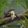 AAALee-Eng-Tan-000000-Helpless-Lizard-2020_2020WLC