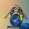 AAASchmitz-Willi-000000-Two-wasp-s-2020_2020WLC