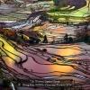 AAAZheng-Kai-000000-Yuanyang-Terrace-2019_2020WLC