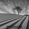 1_AAAAl-Busaidi-Samir-000000-Way-To-trees-2018_2020WLC