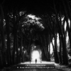 AAABusini-Alberto-052261-Toward-the-light-2020_2020WLC
