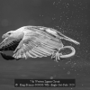 AAAKing-Francis-000000-WB-Eagle-Got-Fish-2020_2020WLC