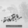 AAAZHIZHOU-JIANG-000000-go-in-the-snow-2020_2020WLC