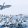 CHAN-H.W.-03441676-Flutter-2-2012_2019WLC