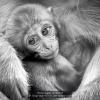 Brega-Giulio-013326-Little-monkey-2019_2019WLC