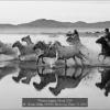 Kwan-Phillip-000000-Horses-in-Water-71-2019_2019WLC