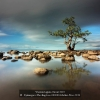 Djatinegoro-The-Eng-Loe-000000-Mother-Tree-2019_2019WLC