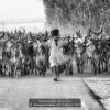 Romagnoli-Daniele-48623-Herd-2-2018_2019WLC