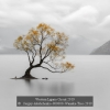 Sergey-Aleshchenko-000000-Wanaka-Tree-2019_2019WLC