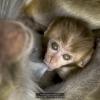Brega-Giulio-013326-Monkey-2019_2019WLC