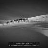An-Xiping-000000-Camels-In-Teh-Desert-2017_2019WLC