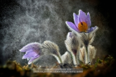 sito00251A04_Krisztian-Lakatos-Hungary-Spring-updateCLP